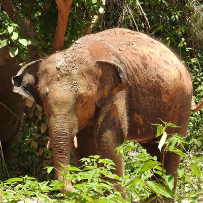 Singha Pattaya Elephant Sanctuary Thailand