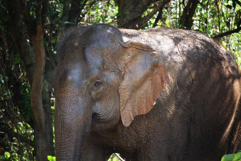 elephant relaxing in the shade at Pattaya Elephant Sanctuary Thailand