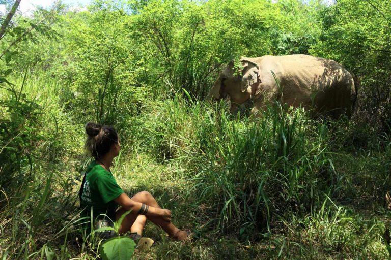 oberving a female elephant foraging at Pattaya Elephant Sanctuary Thailand