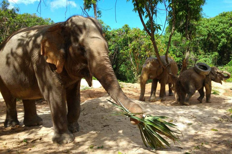 the herd relaxing at Pattaya Elephant Sanctuary Thailand