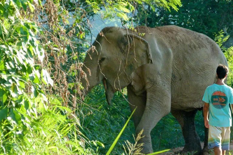 walking with elephants at Pattaya Elephant Sanctuary Thailand