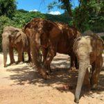 Pattaya Elephant Sanctuary Thailand