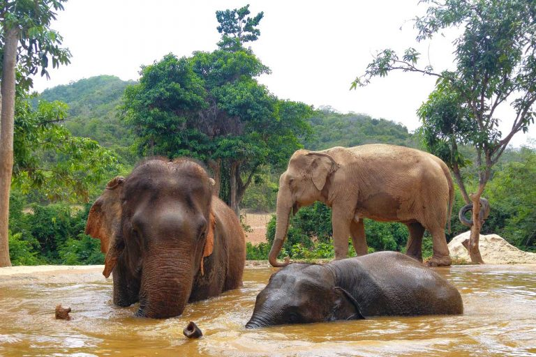 The herd relaxing at elephant sanctuary in Pattaya
