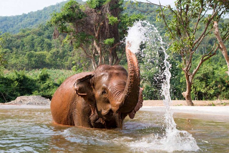 Elephant plays in the water at Pattaya Elephant Sanctuary Thailand