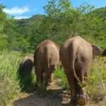 Pattaya Elephant Sanctuary Thailand